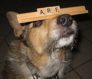 My dog Wheezy also has a way with words